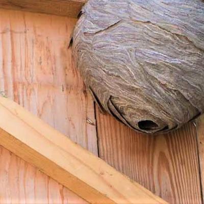Destruction d un nid de guepes dans une cabane de jardin a creil 60100 pro guepes