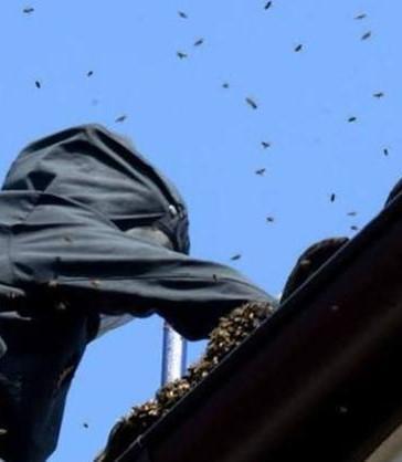 Enlevement nid de guepes dans un conduit de cheminee a chantilly 60500 pro guepes oise