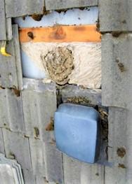 Intervention pour enlever un nid de guepes sous tuiles a compiegne 60200